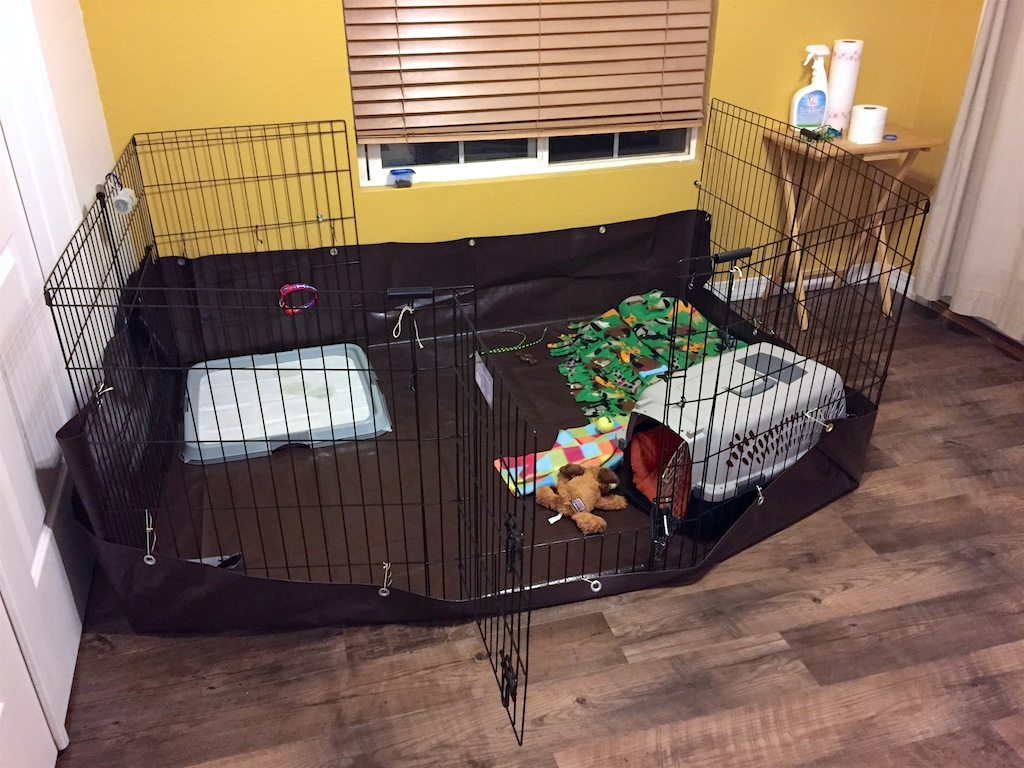 Playpen for a Havanese Puppy